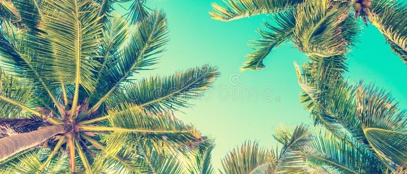 Blauwe hemel en palmenmening van onderaan, uitstekende stijl, de zomer panoramische achtergrond stock fotografie