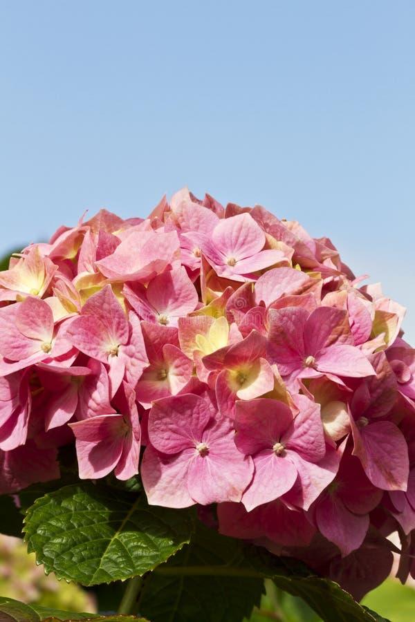 Blauwe Hemel En Roze Bloemblaadjes Royalty-vrije Stock Fotografie