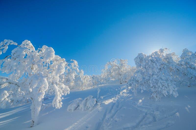 Blauwe hemel en sneeuw royalty-vrije stock afbeelding