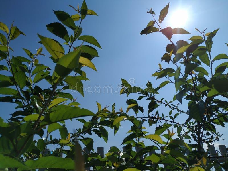 Blauwe hemel en zon in mijn tuin royalty-vrije stock fotografie