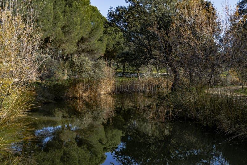 Blauwe hemel, groene bomen en stromen van water stock afbeelding