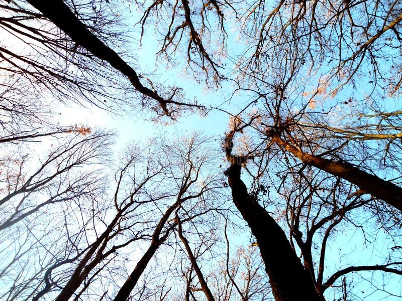 Blauwe hemel in het bos tussen de takken stock foto's