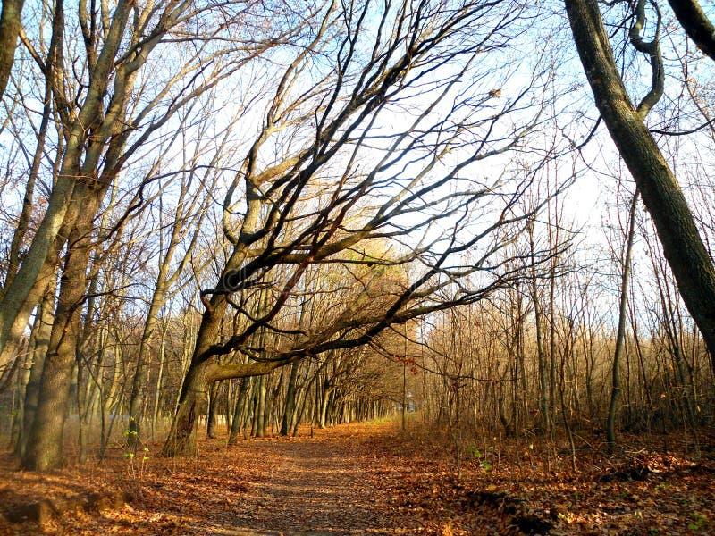 Blauwe hemel in het bos tussen de takken stock foto