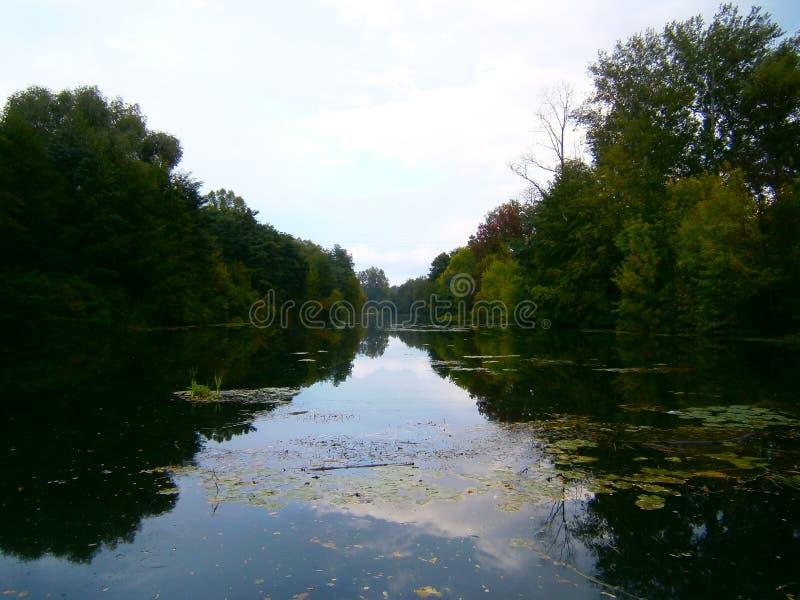 Blauwe hemel in het bos tussen de takken royalty-vrije stock afbeeldingen