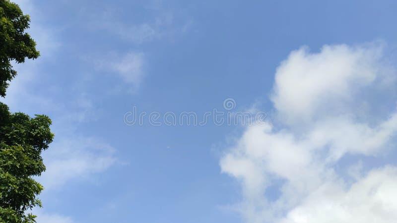 Blauwe hemel met boom royalty-vrije stock foto's