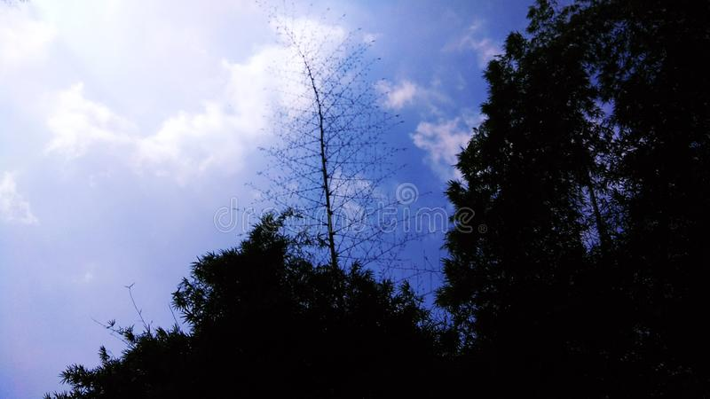 Blauwe hemel met boom stock afbeelding