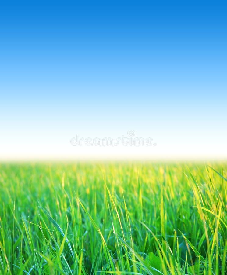 Blauwe hemel met gras royalty-vrije stock foto