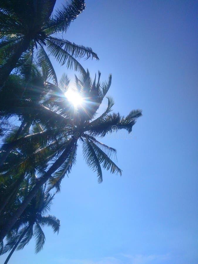 Blauwe hemel met kokospalm stock foto