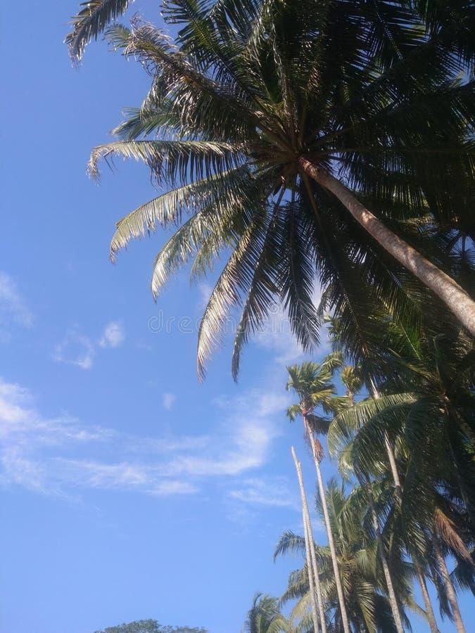 Blauwe hemel met kokospalm stock fotografie