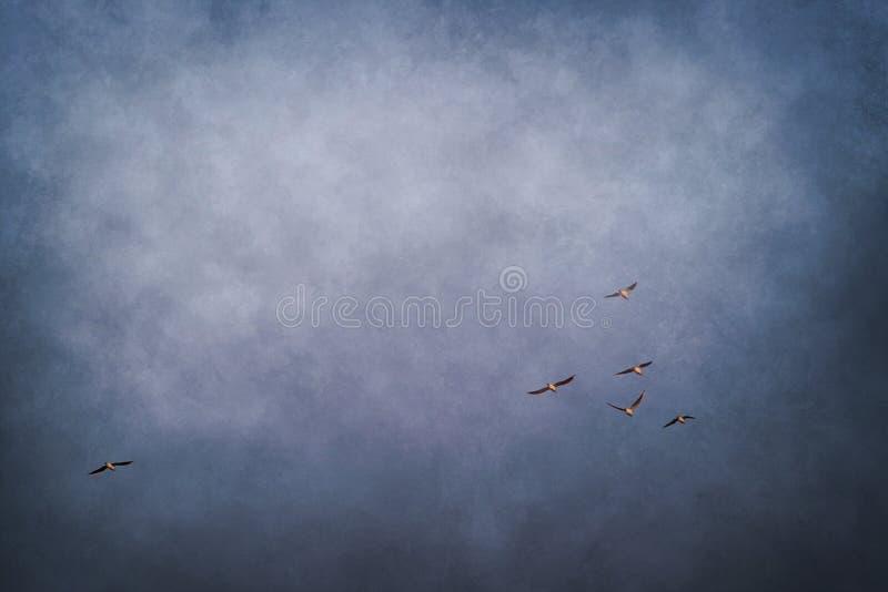 blauwe hemel met troep van vliegende vogels royalty-vrije stock afbeelding