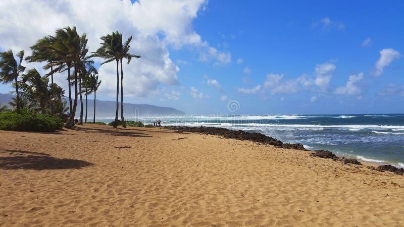 Blauwe hemel met wolken met palmen op strand in de foto van Hawaï stock foto's