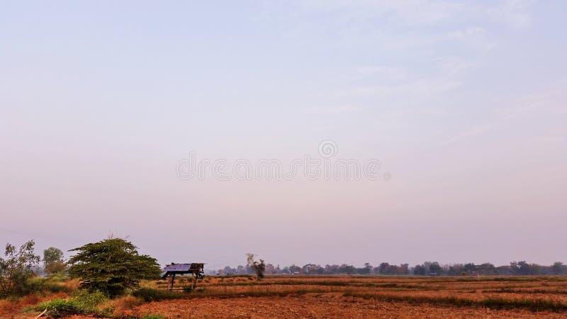 Blauwe hemel Natuurlijk landschap elke ochtend Rijstvelden die beginnen te drogen nadat de landbouwer de oogst heeft beëindigd Ro stock afbeelding