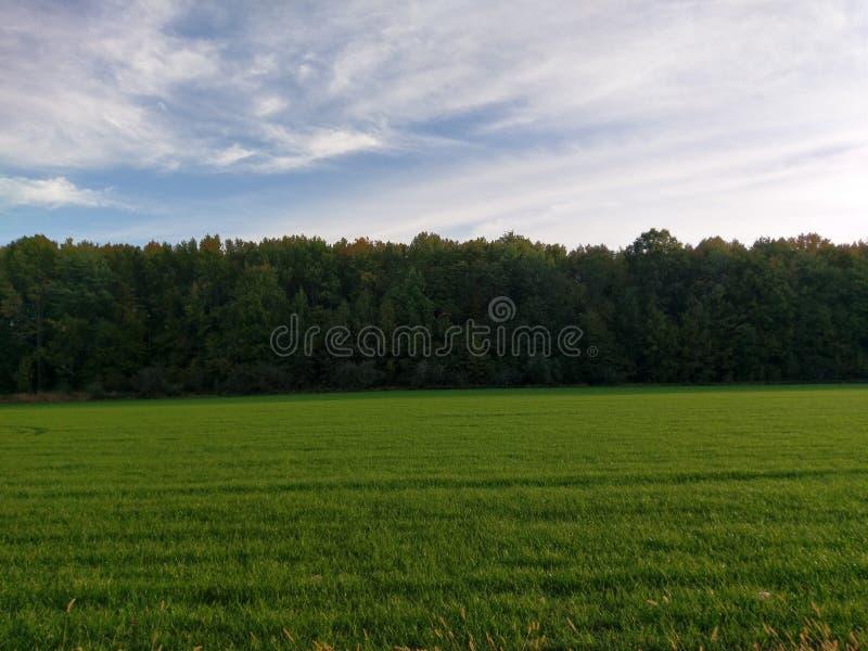 Blauwe Hemel over Groene Bomen royalty-vrije stock foto's