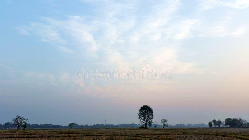 Blauwe hemel Rijstvelden die beginnen te drogen in de winter in Thailand Foto van Royalty free stock stock foto's