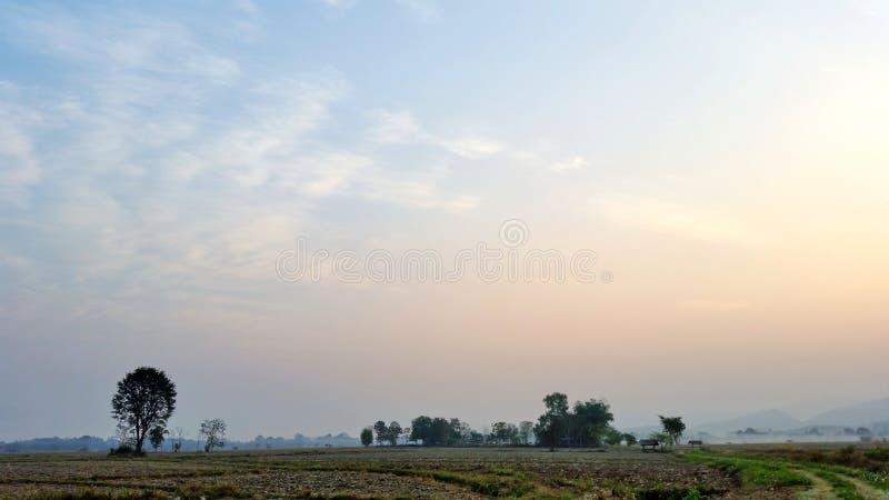 Blauwe hemel Rijstvelden die beginnen te drogen in de winter in Thailand Foto van Royalty free stock royalty-vrije stock foto's