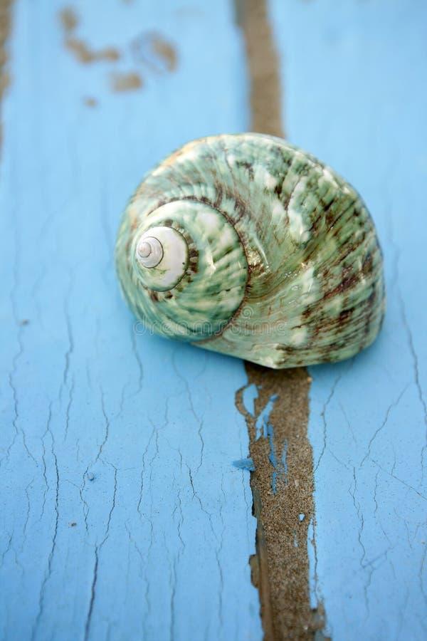 Blauwe houten groene overzeese van de strandvloer shell royalty-vrije stock fotografie