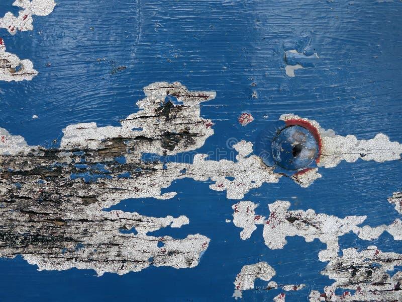 Blauwe houten sjofele en schilverf met de roestige grote klinknagels van de metaal hoofdnoot, deel van oude houten een doorstane  stock foto's