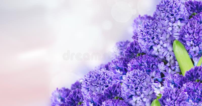 Blauwe hyacint royalty-vrije stock foto