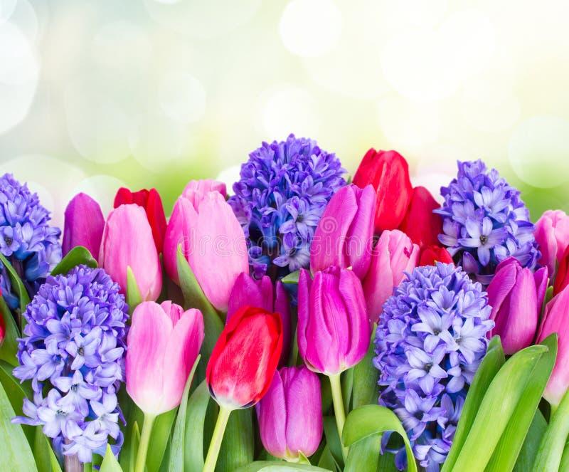 Blauwe hyacint en tulpen royalty-vrije stock foto's