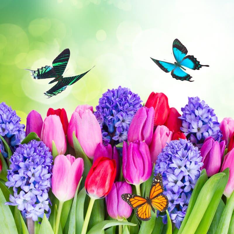Blauwe hyacint en tulpen royalty-vrije stock foto