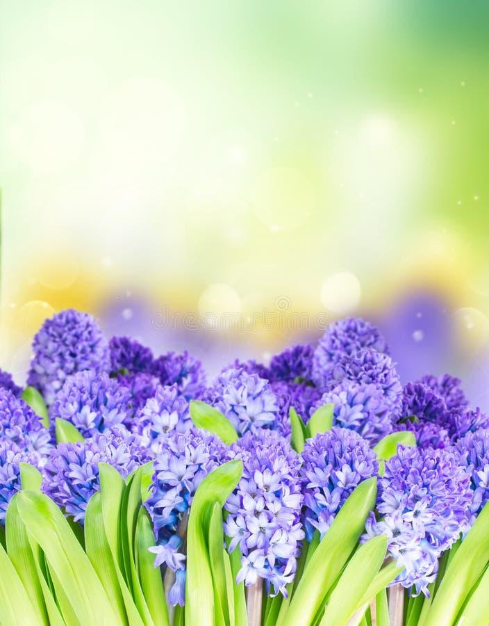 Blauwe hyacint op groen royalty-vrije stock afbeelding