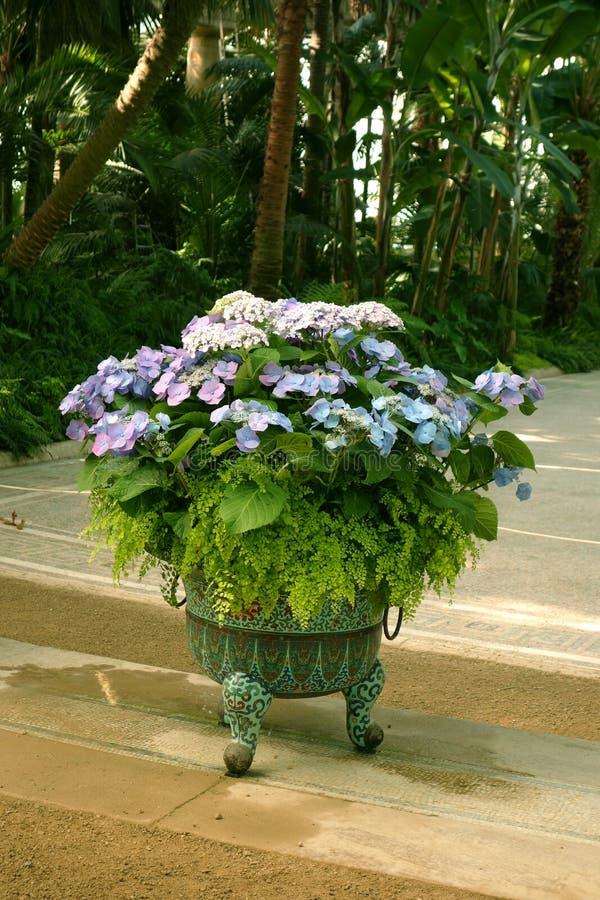 Blauwe Hydrangea hortensiabloemen en Varens royalty-vrije stock foto