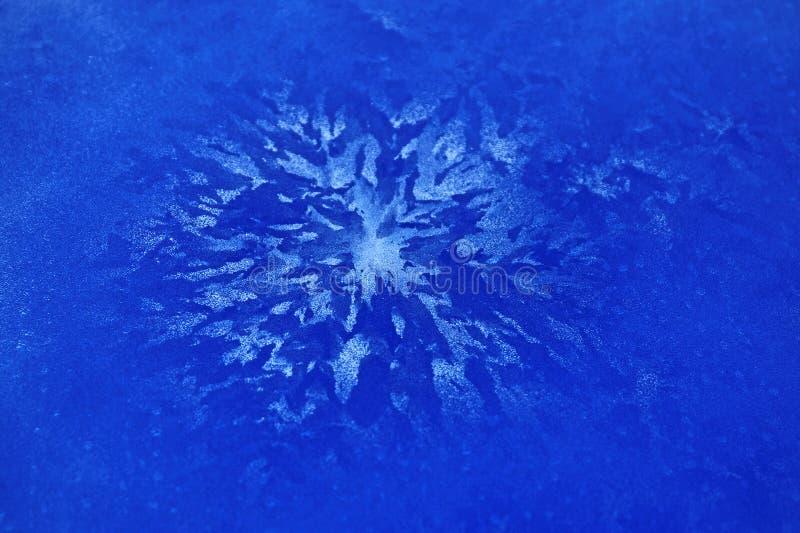 Blauwe ijsbloem royalty-vrije stock afbeelding