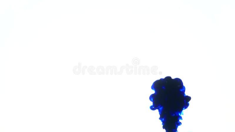 Blauwe inkt in water Creatieve langzame motie Op een witte achtergrond royalty-vrije stock foto