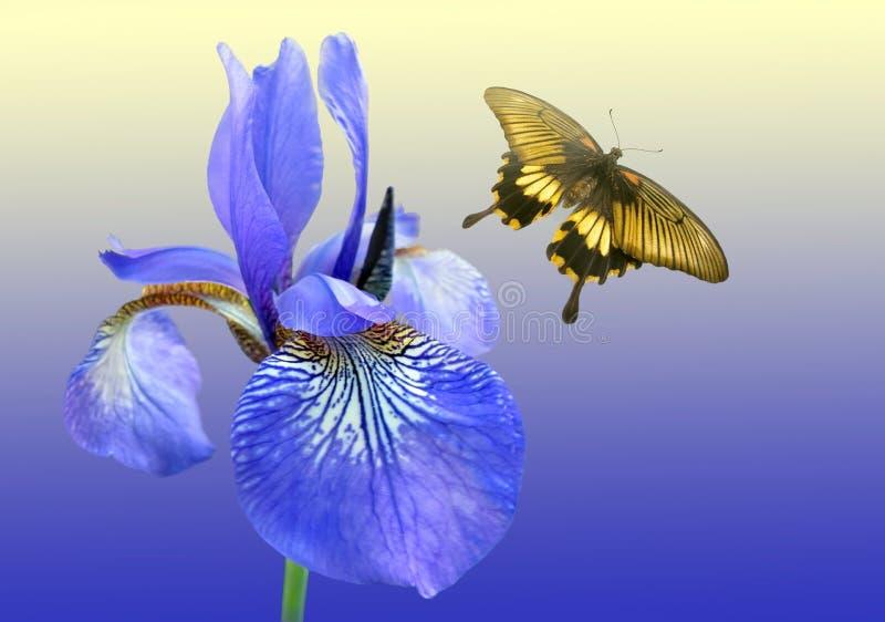 Blauwe iris en vlinder stock fotografie
