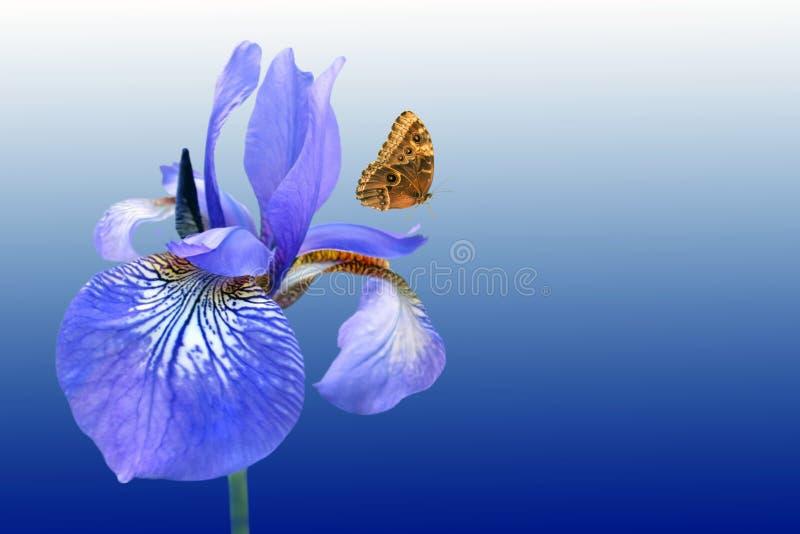 Blauwe iris en vlinder stock foto's