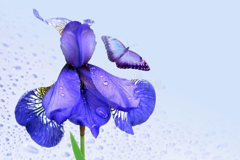 Blauwe iris en vlinder stock afbeeldingen