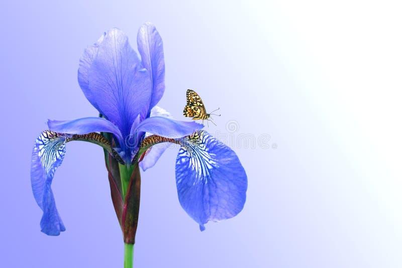 Blauwe iris en vlinder royalty-vrije stock foto's