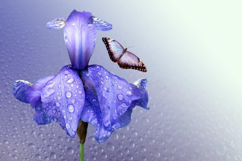 Blauwe iris en vlinder royalty-vrije stock afbeelding