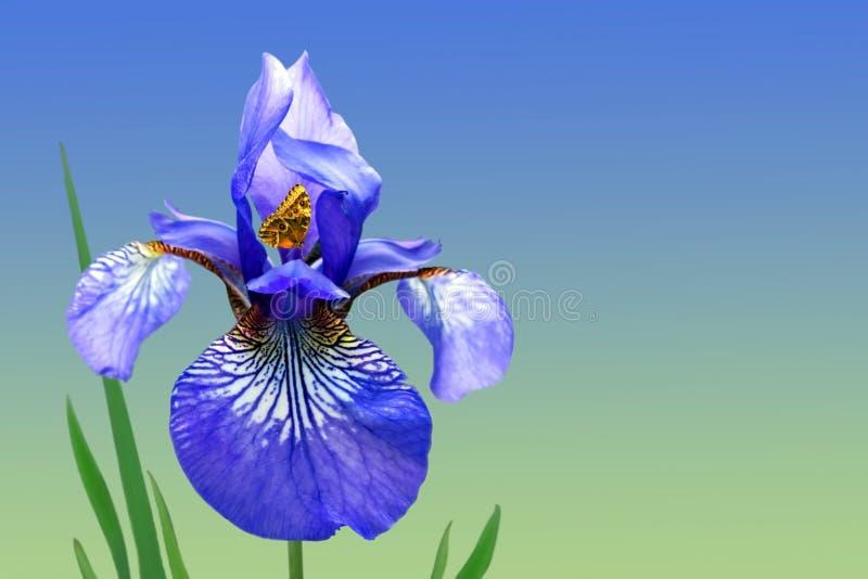 Blauwe iris en vlinder royalty-vrije stock afbeeldingen
