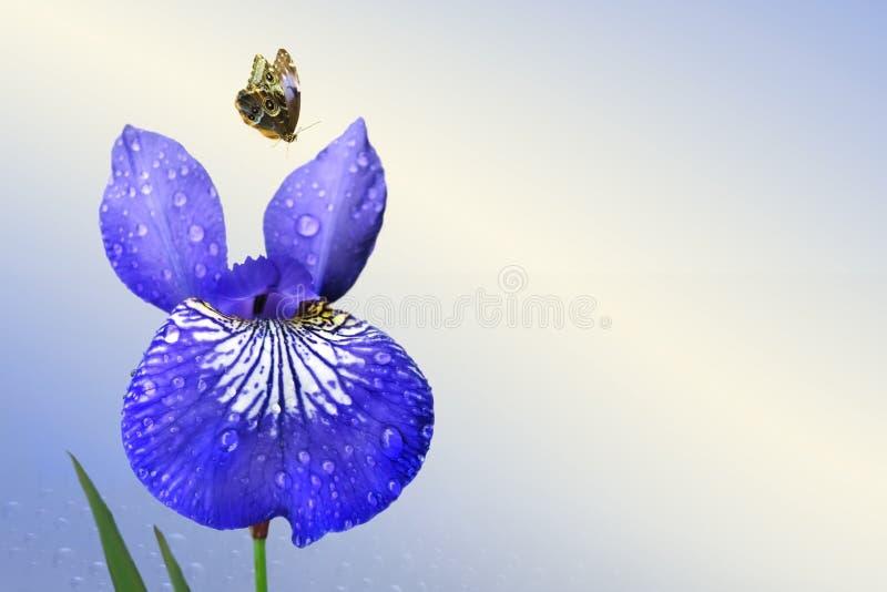 Blauwe iris en vlinder stock foto