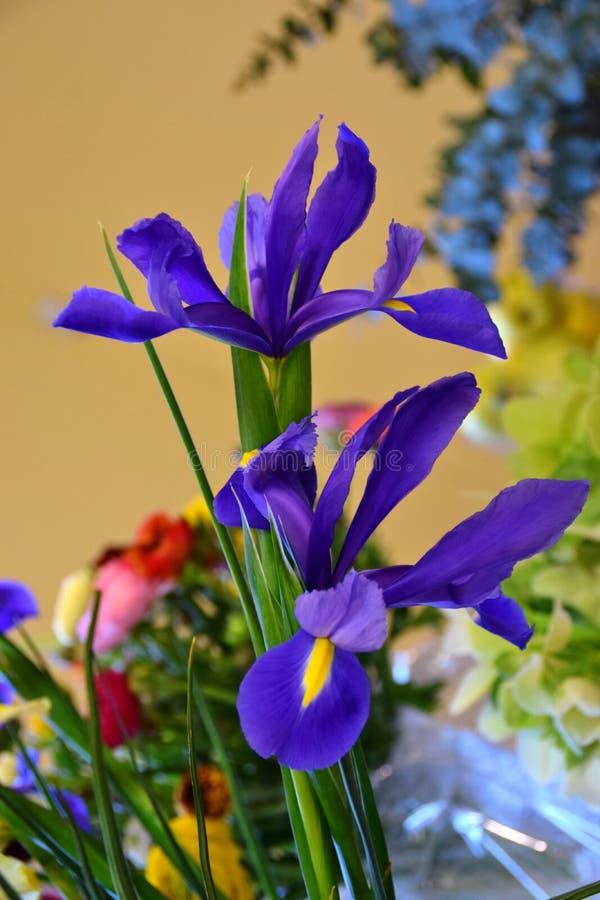 Blauwe iris twee stock afbeelding