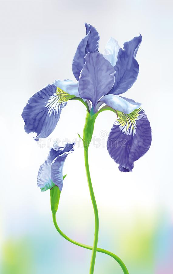 Blauwe Iris vectorbloem vector illustratie