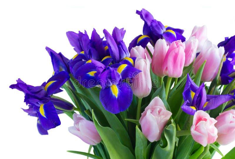 Blauwe irissen en pik tulpen royalty-vrije stock foto