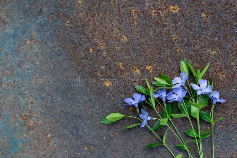 Blauwe kleine bloemen op een roestige oppervlakte stock fotografie