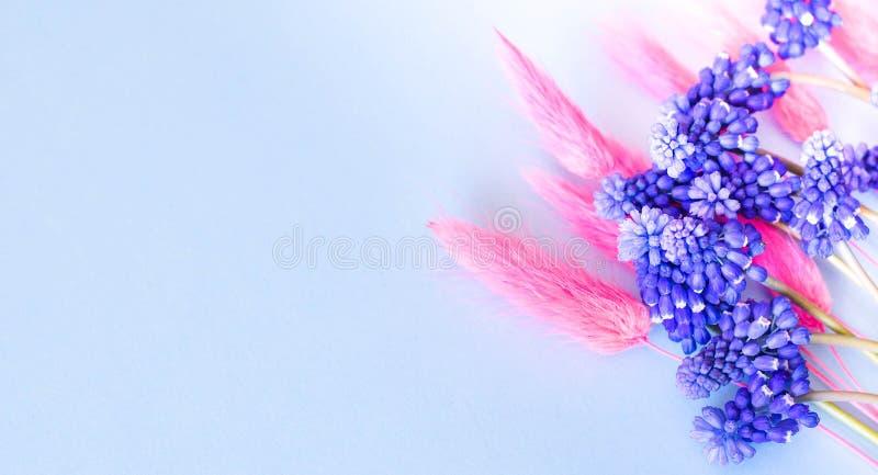 Blauwe kleurenbanner met blauwe bloemen en roze aartjes stock afbeeldingen