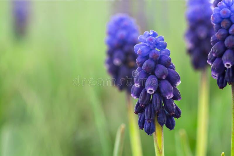 Blauwe klokbloemen royalty-vrije stock fotografie