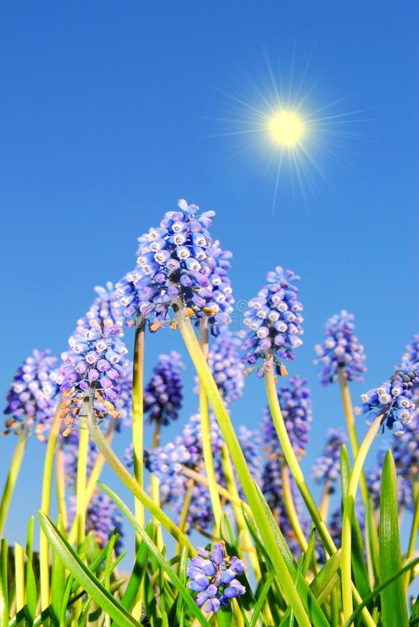 Blauwe klokbloemen royalty-vrije stock afbeelding