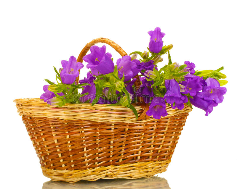 Blauwe klokbloemen in mand stock foto