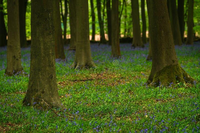 Blauwe klokken onder de bomen van een klein bos royalty-vrije stock foto