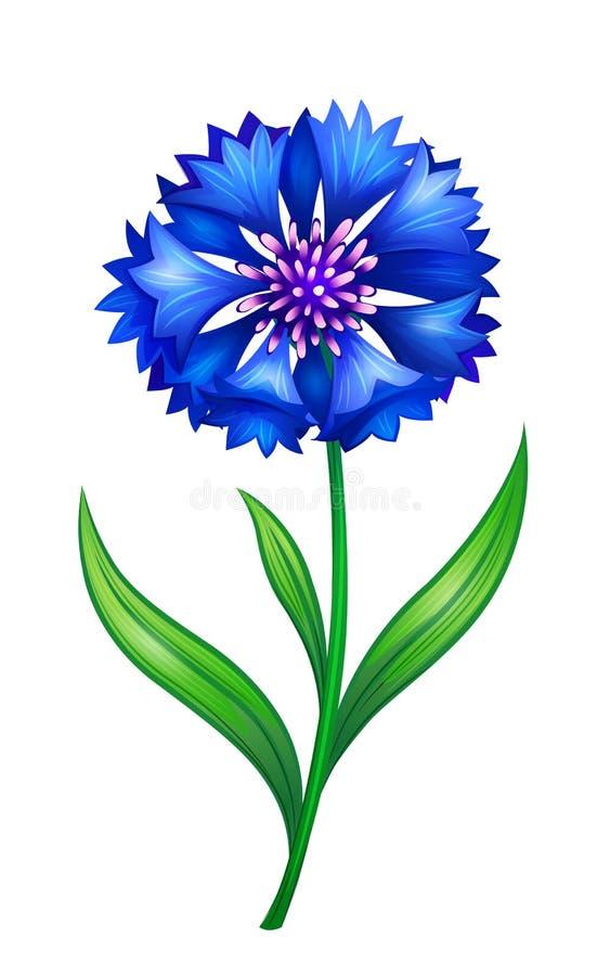 Blauwe korenbloem stock illustratie