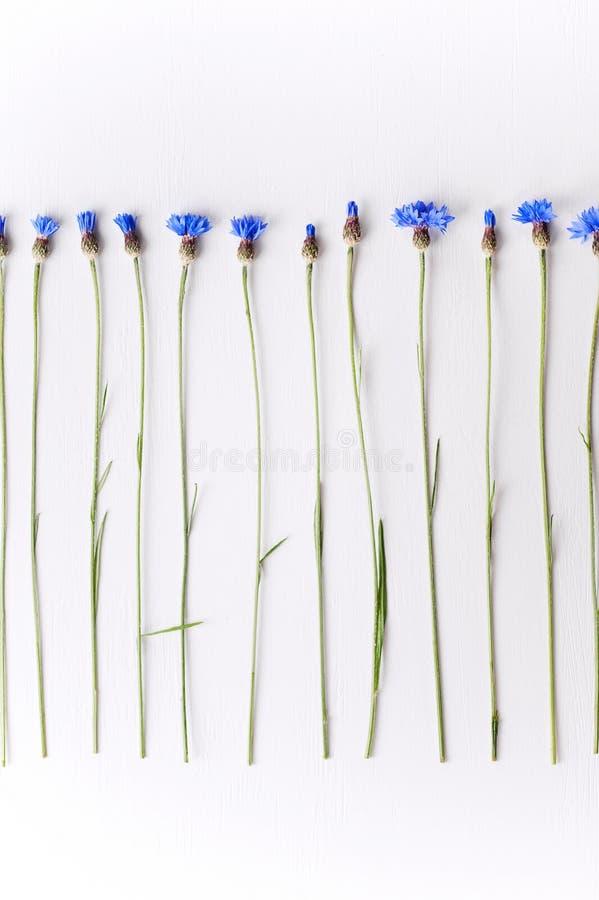 Blauwe korenbloemen op witte concrete achtergrond stock fotografie
