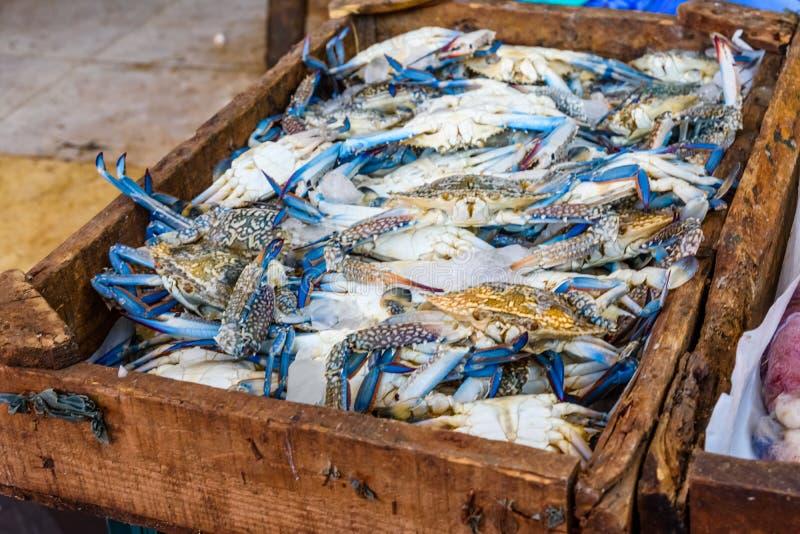 Blauwe krabben op een vissenmarkt in een Hurghada-stad, Egypte stock foto