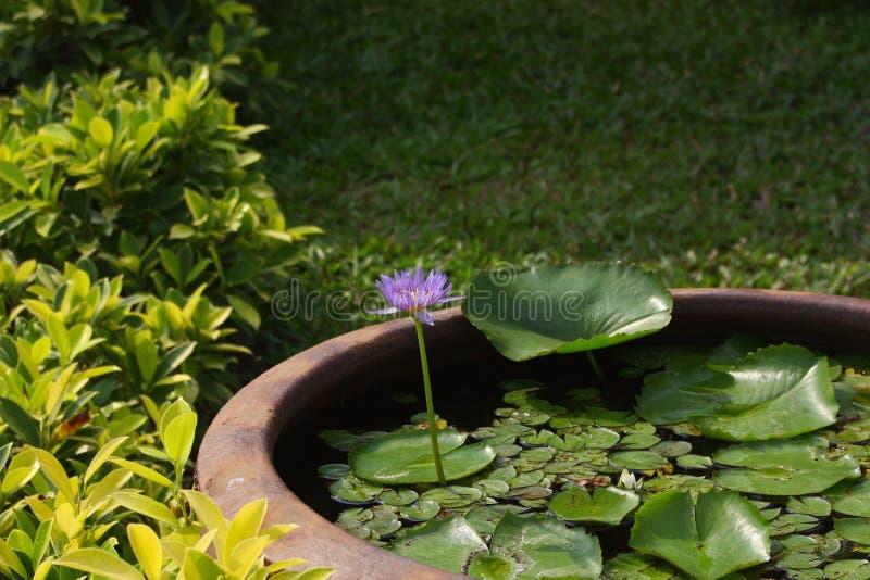 Blauwe Lotus Flower Detail royalty-vrije stock fotografie