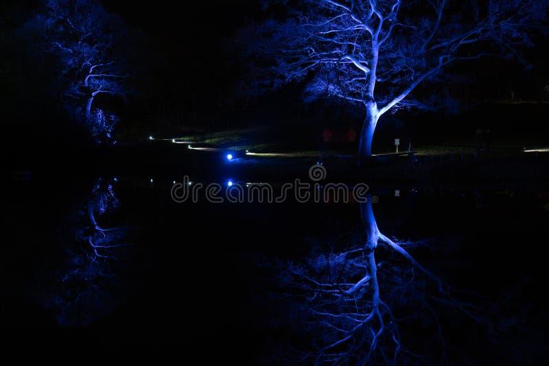 Blauwe met schijnwerpers verlichte bomen in de winter stock foto