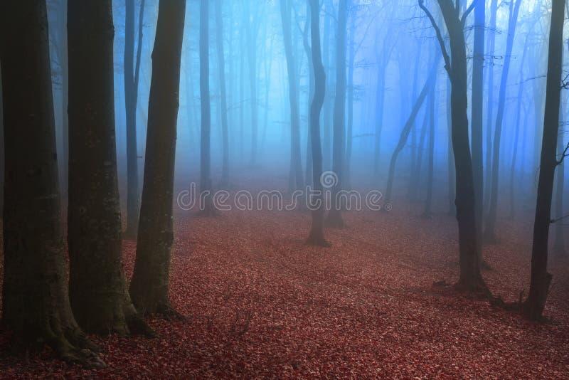 Blauwe mist en griezelige bomen royalty-vrije stock fotografie